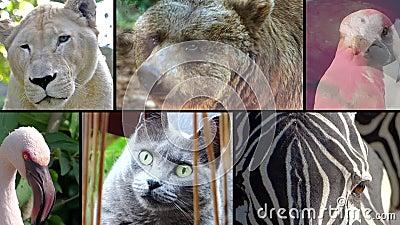 Животные стороны, монтаж видеоматериал
