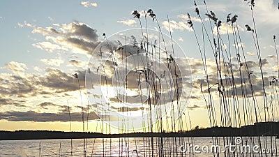 Заводы озера камышовые с красивым небом захода солнца с облаками сток-видео