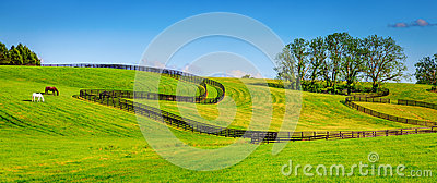 Загородки фермы лошади