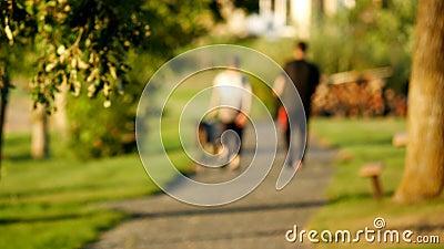Запачканный зажим вне--фокуса молодых пар идя собаки совместно в парк видеоматериал