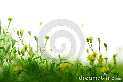 засевает одичалое травой