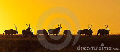 заход солнца Намибии gemsbok