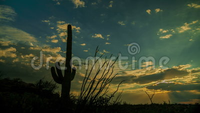 Заход солнца кактуса Saguaro видеоматериал