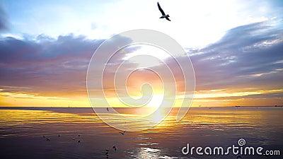 Заход солнца моря спокойной сцены пасмурный при чайки летая и плавая на воду на заходе солнца видеоматериал