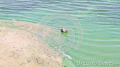 Зацветая Green River моет белый песчаный пляж видеоматериал