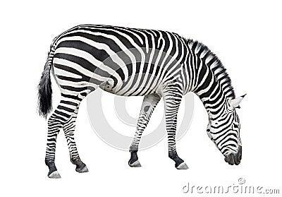 зебра выреза
