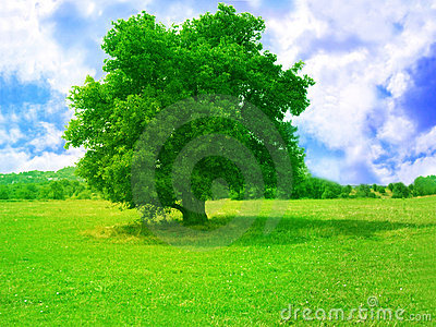 зеленый вал
