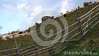 Зеленый холм с стадом сияющих под голубым небом видеоматериал
