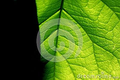 зеленый цвет контраста