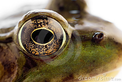 зеленый цвет лягушки