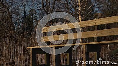 Золотой светлый заход солнца показывая стенд на стороне озера видеоматериал