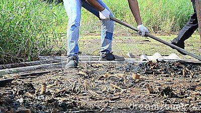 Испытайте расти или культивируйте завод для излечивать и обработки загрязнения почвы акции видеоматериалы