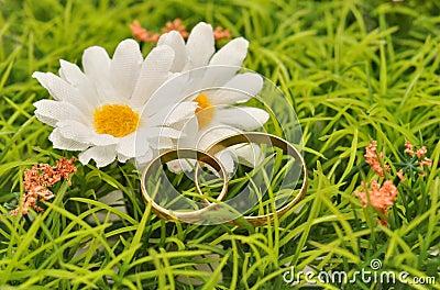 кольца маргариток