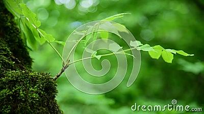 Конец-вверх толстого зеленого мха в лесе на толстом стволе дерева Насыщенный зеленый цвет камера искусства красивейшая eyes спосо сток-видео