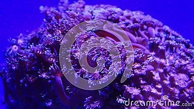 коралл сток-видео