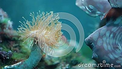 Коралл в реальном маштабе времени акции видеоматериалы