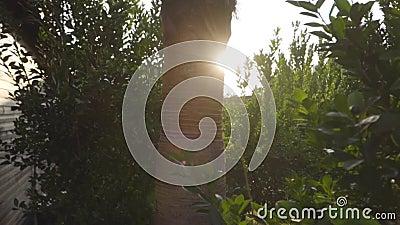 Коричневый ствол между зелеными листьями при солнечном свете Закат или рассвет на востоке страны Красивая турецкая природа сток-видео