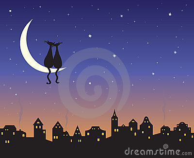 коты любя луну 2