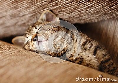Кот котенка спать
