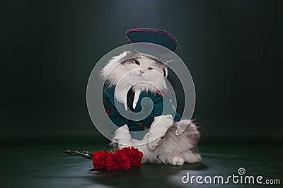 Кот одетый как Дженерал