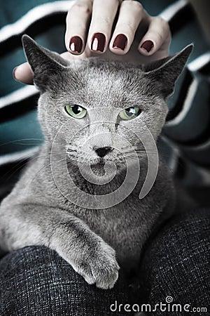 кот одичалый