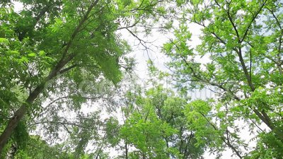 Красивая акация в солнечном дне Зеленое листво видеоматериал