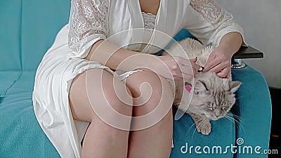 Красивая девушка кладет дальше бабочку сиамского кота Девушка сидит на кресле и коте сидя рядом Крутой момент сток-видео