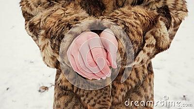 красивейшие детеныши женщины шерсти пальто Девушки пробуют нагревать замерзая руки сток-видео