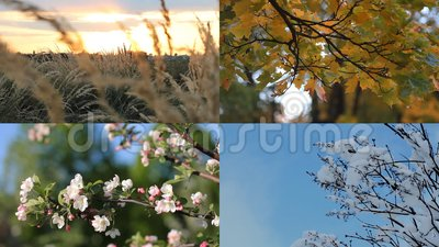 Красивый коллаж - осень, зима, весна, лето - 4 сезона сток-видео