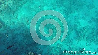 Красивый подводный зажим акции видеоматериалы