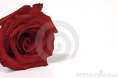 красный цвет поднял
