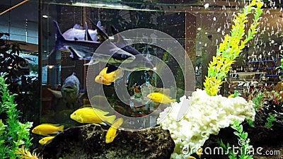 Красочные рыбы в большом садке для рыбы видеоматериал