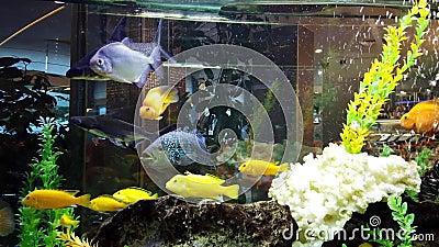 Красочные рыбы в большом садке для рыбы акции видеоматериалы
