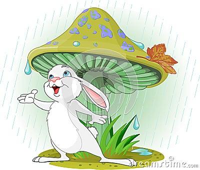 Кролик гриба