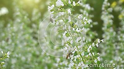 Крупный план цветка pollinationand пчелы