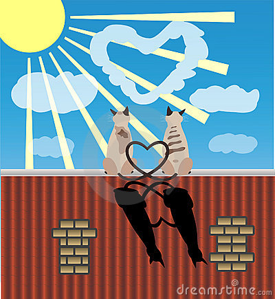 крыша 2 любовников котов