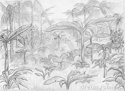 ландшафт джунглей