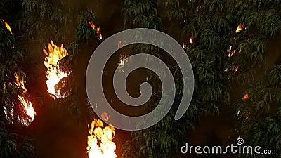 Лес на склоне холма, огромный пожар с густым дымом сток-видео