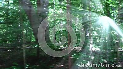 Лес с излучающим солнечным светом сток-видео