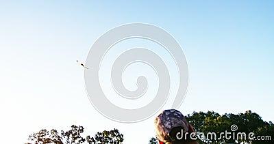 Летание орла сокола в небе сток-видео