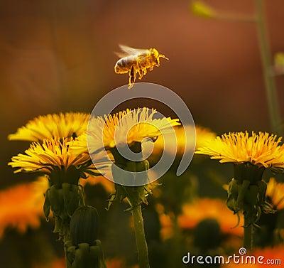 летание пчелы