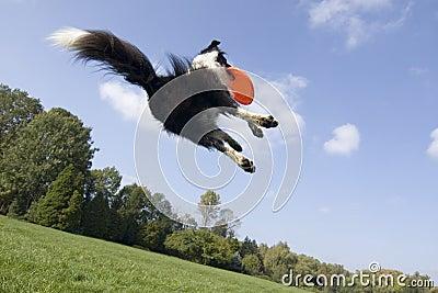 летание собаки