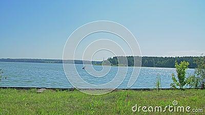 Лето Камера двигает к речному берегу на зеленой траве за деревьями Затишье, безмолвие, спокойствие видеоматериал