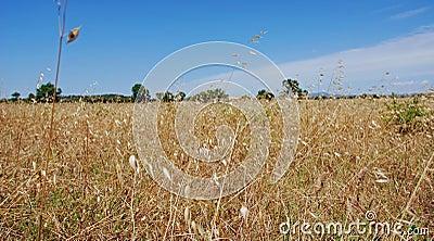 лето поля