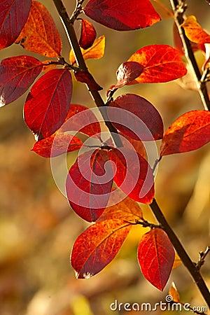 листья предпосылки осени