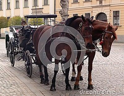 лошади hackney