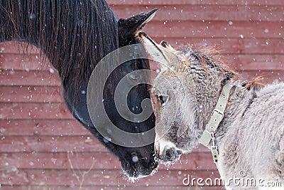 Лошадь и осел