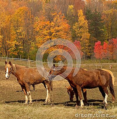 Лошади в осени