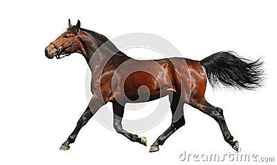 лошадь залива