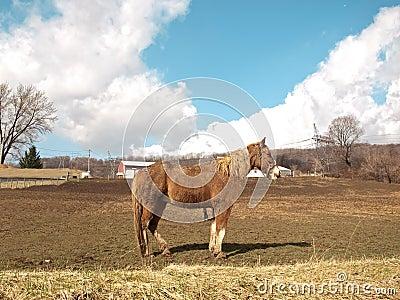 Лошадь фермы